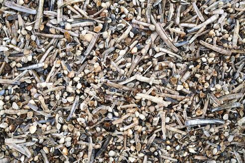 Seashells - MMIF00020