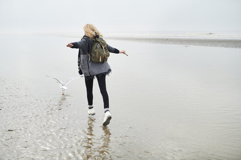 Netherlands, back view of young woman with backpack walking behind a seagull on the beach - MMIF00041
