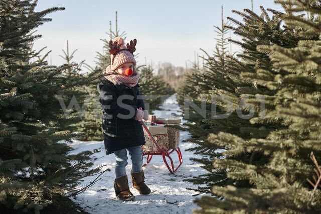 Girl in christmas tree forest pulling presents on toboggan, portrait - CUF02930