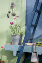 Potted tulips in metal bucket - GISF00337