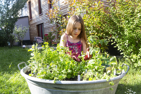 Girl planting herbs in zinc tub in the garden - SARF03737