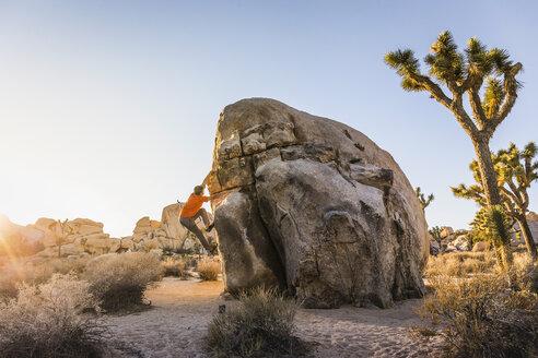 Male boulderer moving up boulder in Joshua Tree National Park at dusk, California, USA - CUF04924