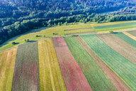 Germany, Baden-Wuerttemberg, Rems-Murr-Kreis, Swabian Franconian forest, Aerial view of fields - STSF01556