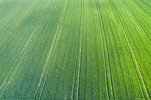 Germany, Baden-Wuerttemberg, Rems-Murr-Kreis, Aerial view of green field - STSF01559
