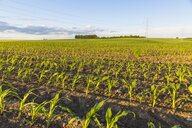 Austria, Innviertel, field with plants - AIF00476