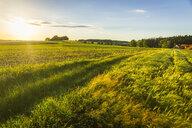Austria, Innviertel, field - AIF00479