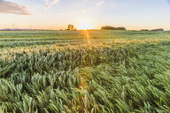 Austria, Innviertel, field against morning sun - AIF00485