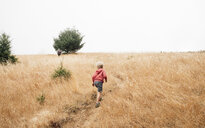 Boy in foggy field landscape, Fairfax, California, USA, North America - CUF07259