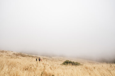 Mother and sons walking in misty field, Fairfax, California, USA, North America - CUF07274