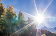 The sun over larch forest in Swiss Alps, Simply Pass, Valais, Switzerland - CUF07343