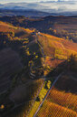 View from hot air balloon of rolling landscape and autumn vineyards, Langhe, Piedmont, Italy - CUF07570