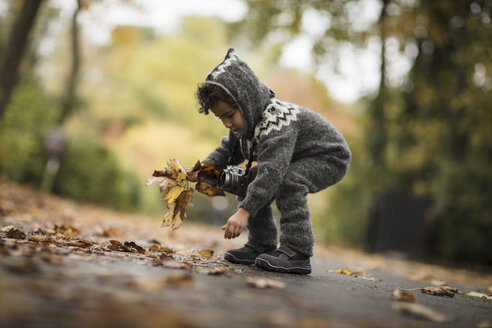 Young girl  outdoors, wearing knitted suit, collecting autumn leaves - CUF07924