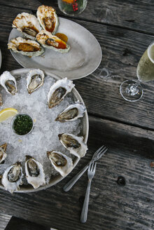 Oysters, Tomales Bay, Marin County, California, USA - ISF02012