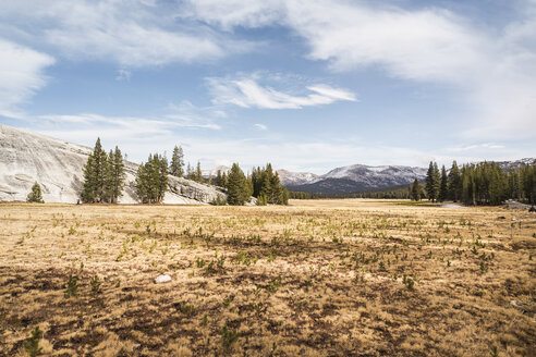 Landscape with distant mountains, Yosemite National Park, California, USA - CUF07983