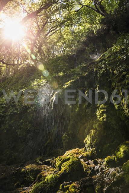 Waterfall splashing on moss in sunlit forest, Coyhaique National Reserve, Coyhaique Province, Chile - CUF08085