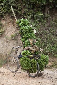 Bicycle on dirt track stacked with bunches of bananas, Masango, Cibitoke, Burundi, Africa - CUF08091