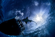 Shark swimming in sea under sunrays and boat - CUF08199