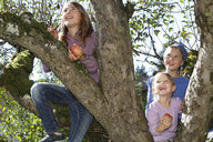 Three young girls picking apples from tree - CUF08424