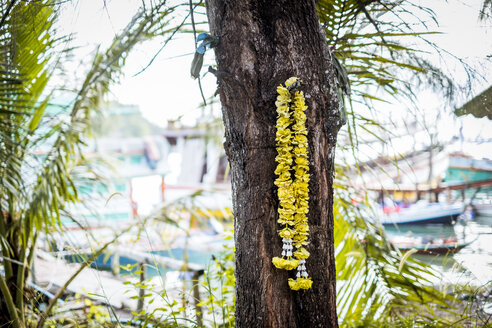 Thailand, Koh Phangan, yellow flower garland hanging at tree trunk - MMIF00061