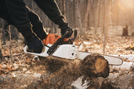 Cropped shot of man chainsawing tree trunk on autumn forest floor - CUF10692