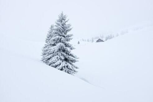 Austria, Salzburg State, Heutal, Sonntagshorn, snow-covered landscape - HAMF00296