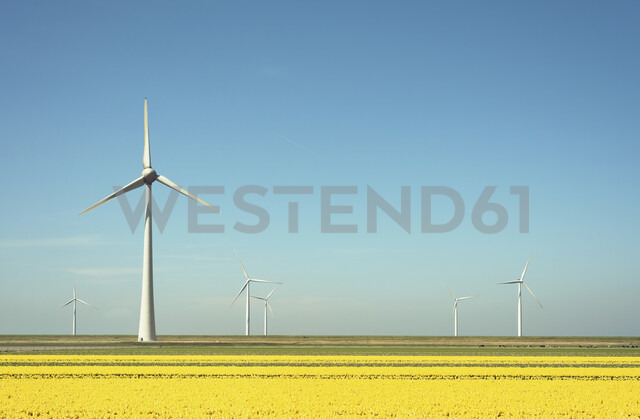 Wind turbines in field landscape of yellow flowers - CUF12718 - Mischa Keijser/Westend61