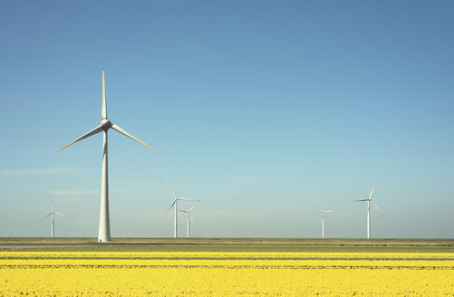 Wind turbines in field landscape of yellow flowers - CUF12718