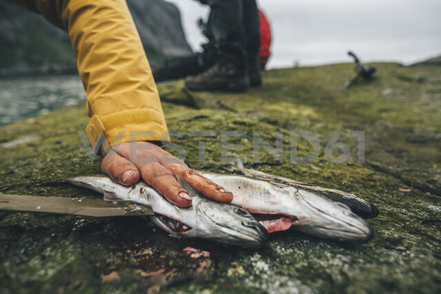 Norway, Lofoten, Moskenesoy, Young men cleaning freshly caught fish at Horseid Beach - GUSF00864