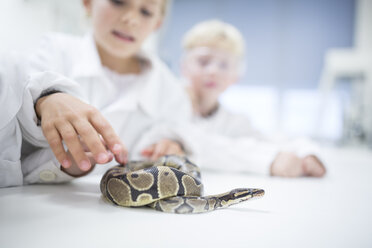 Pupils in science class examining snake - WESTF24235