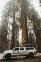 Young man looking out at forest from top of vehicle, Sequoia National Park, California, USA - ISF06195
