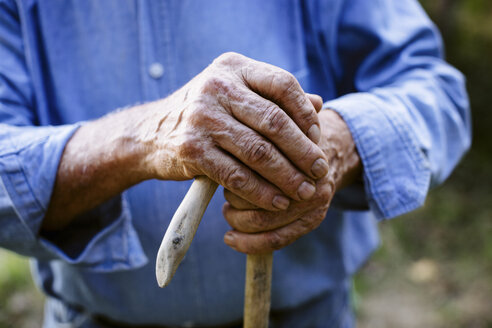 Close up of senior male farmers hands, Italy - CUF15074