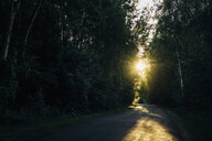 Empty country road through forest at sunset - MJF02263