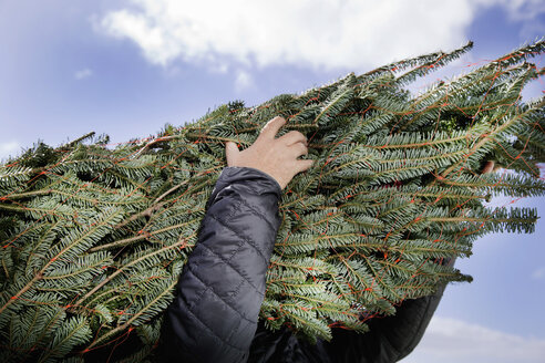 Low angle view of person carrying Christmas tree - ISF07422