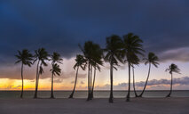 Row of silhouetted palm trees at sunset, Dominican Republic, The Caribbean - CUF19745