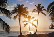 Silhouetted palm trees at sunset on beach, Dominican Republic, The Caribbean - CUF19748