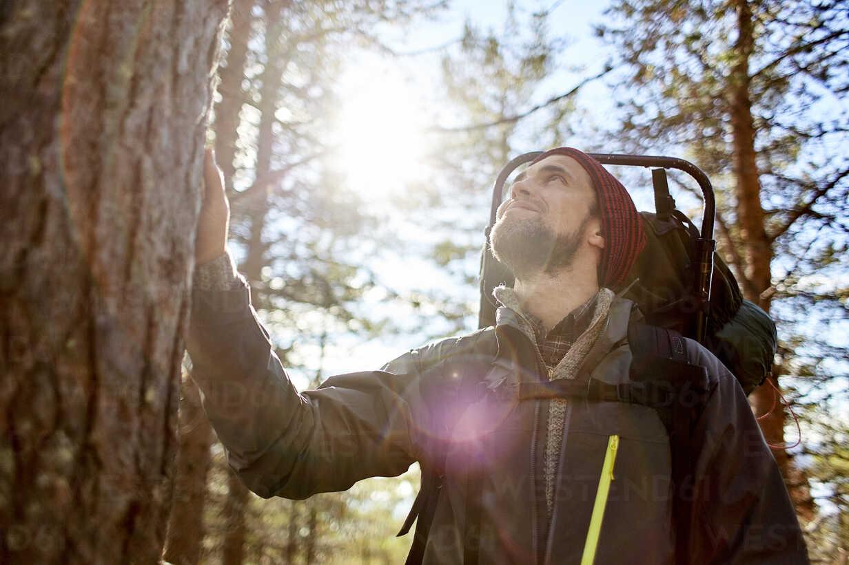 Hiker looking up tree, Keimiotunturi, Lapland, Finland - CUF20082 - Aleksi Koskinen/Westend61