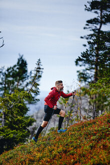 Trail runner ascending steep hill with trekking poles, Kesankitunturi, Lapland, Finland - CUF20121