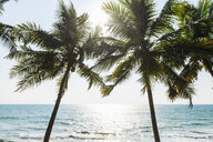 Coconut trees, sunny day at beach, Kerala, India - CUF20199