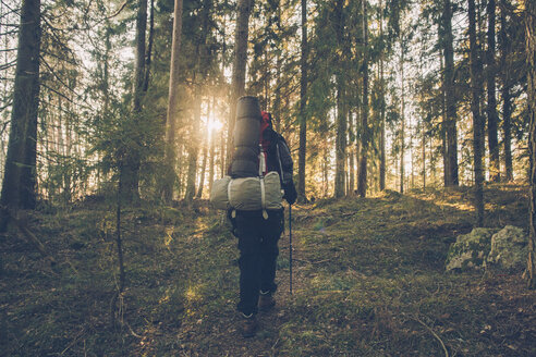 Sweden, Sodermanland, backpacker hiking in remote forest in backlight - GUSF00918