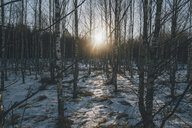 Sweden, Sodermanland,  remote forest in backlight - GUSF00921