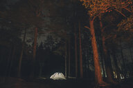 Sweden, Sodermanland, tent in forest under starry sky at night - GUSF00927
