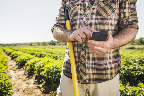 Man in vegetable garden texting on smartphone - CUF20293