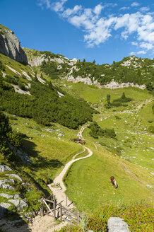 Austria, Tyrol, Maurach, Rofan Mountains, grazing horses - UMF00823