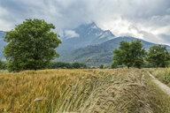 Greece, Peloponnese, Corinthia, Feneos plain, Kyllini Mountains, rye field - MAMF00101
