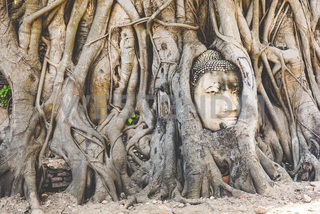 Thailand, Ayutthaya, Buddha head in between tree roots at Wat Mahathat - WPEF00395