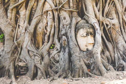Thailand, Ayutthaya, Buddha head in between tree roots at Wat Mahathat - WPEF00395