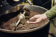 Man's hand holding coffee beans from roaster - CUF21787