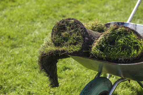 Turf rolls in garden wheelbarrow - CUF21925