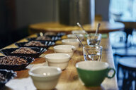 Rows of coffee beans and bowls for tasting on coffee shop counter - CUF22132