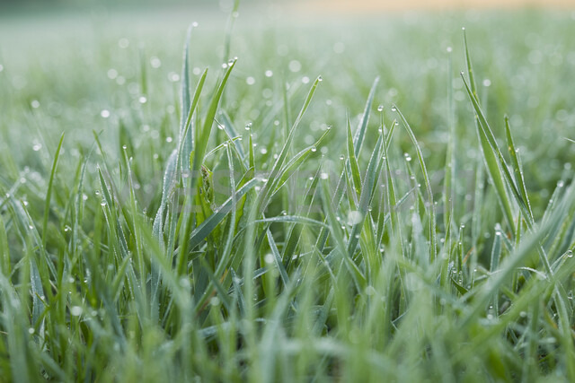 Morning dew on grass - PNEF00638